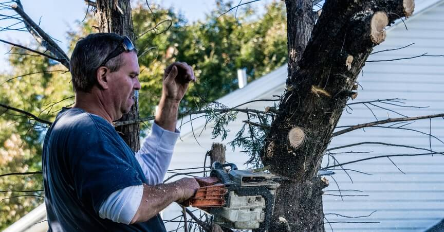 tree removal orland park