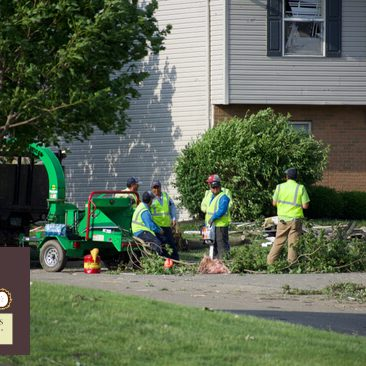 what is the cost to remove a tree in orland park