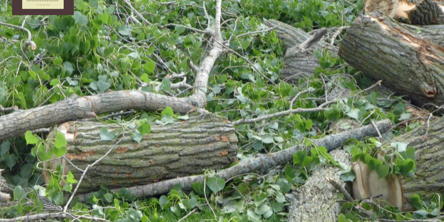 tree cutting service in orland park il